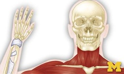 AASU Online Courses Anatomy: Musculoskeletal and Integumentary Systems for Armstrong Atlantic State University Students in Savannah, GA