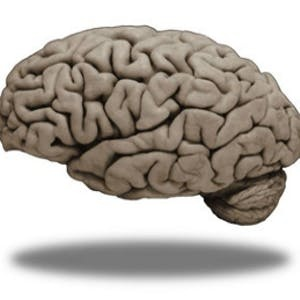 UCLA Online Courses Medical Neuroscience for UCLA Students in Los Angeles, CA