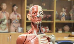 Rollins Online Courses Human Anatomy for Rollins College Students in Winter Park, FL