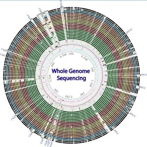 Cal Poly Online Courses Whole genome sequencing of bacterial genomes - tools and applications for Cal Poly Students in San Luis Obispo, CA