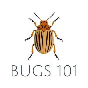 SF State Online Courses Bugs 101: Insect-Human Interactions for San Francisco State University Students in San Francisco, CA